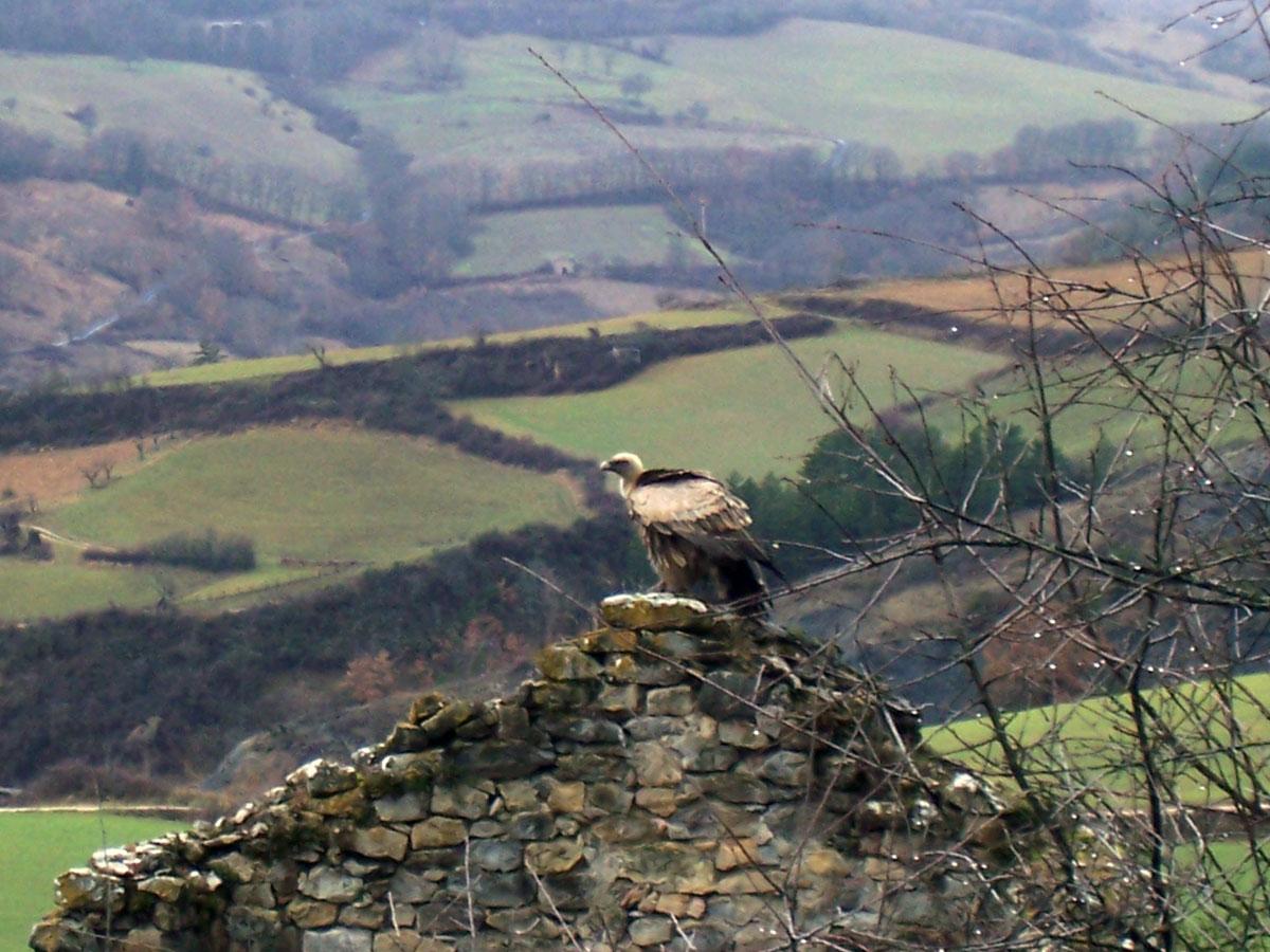 Sous l'oeil vigilant du vautour